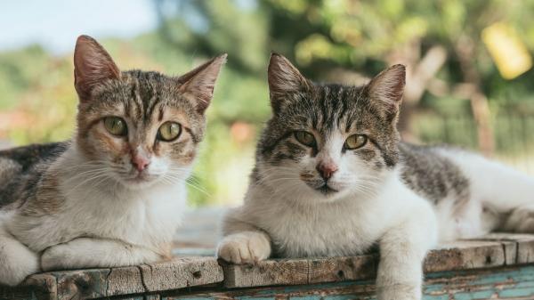 Раскрыт способ защиты человеческого мозга от кошачьего паразита