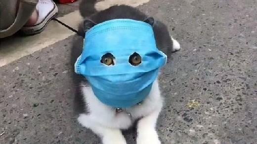 Собаки и кошки могут заразиться коронавирусом от людей — исследование