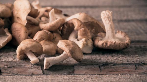 Назван гриб, помогающий бороться с онкологией