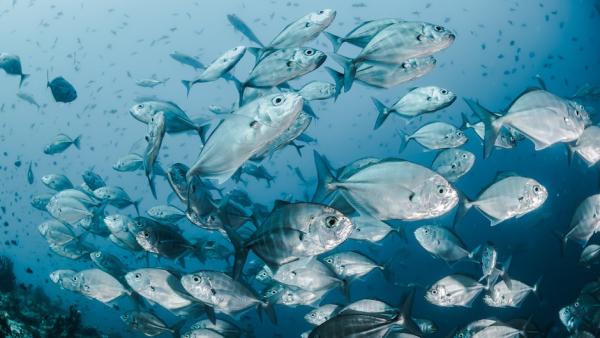 Генетическая мутация делает запах рыбы приятным