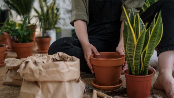 Горшочное растение привело кразжижению мозга садовода