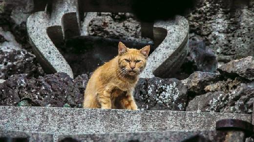 Токсоплазмоз на мягких лапах: опасна ли кошка в доме?