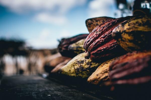 Какао улучшает когнитивные способности