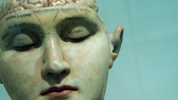 По форме лица можно узнать форму мозга