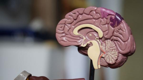 Ученые испытывают вакцину от рака головного мозга